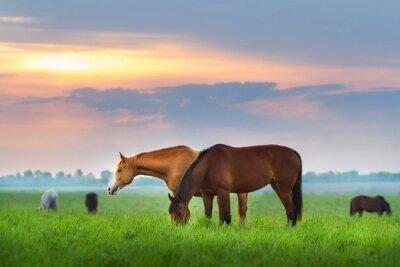 Fototapeta Jízda na stádo na pastvině v sunrize