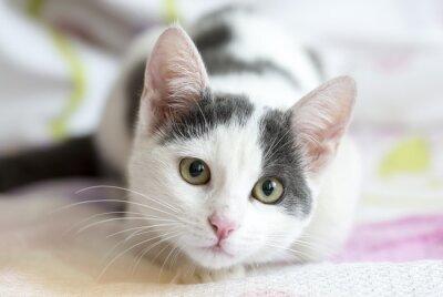 Fototapeta Kedi
