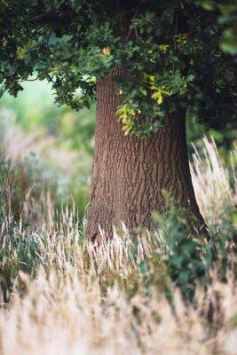 Fototapeta Kmen stromu mezi vysokou žlutou trávou.