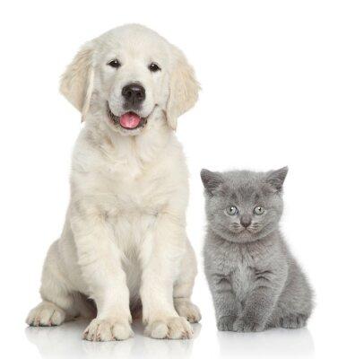 Fototapeta Kočka a pes spolu
