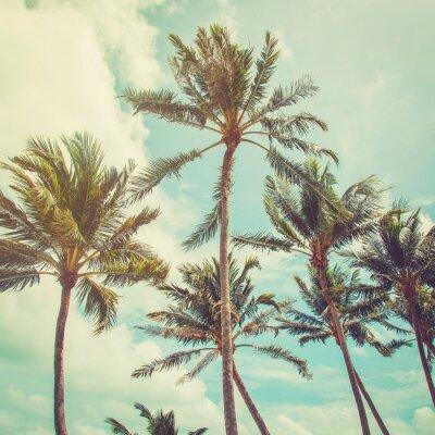 Fototapeta Kokosová palma a modrou oblohu mraky s vintage tónem.