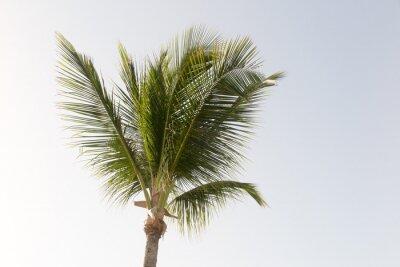 Fototapeta Kokosové palmy a modré oblohy