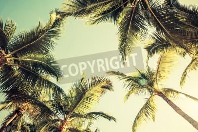 Fototapeta Kokosové palmy nad světlé pozadí oblohy. Vintage styl. Osočil fotografie s filtračním účinkem