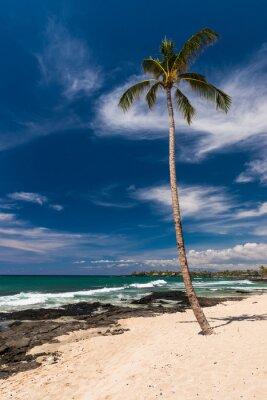 Fototapeta Kokosový palma na havajské pláži, velký ostrov
