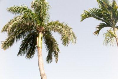 Fototapeta Kokosový strom a modrá obloha v letní pláži