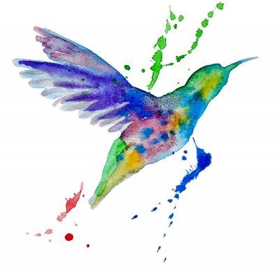 Fototapeta kolibřík vícebarevný na bílém pozadí