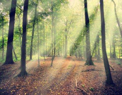 Fototapeta kouzelný les v myst se slunečním paprskem