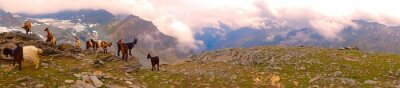 Fototapeta koza rodina