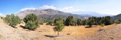 Fototapeta Krajina olivovníků na ostrově Kréta