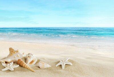 Fototapeta Krajina s mušlí na tropické pláži