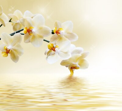 Fototapeta Krásná bílá orchidej