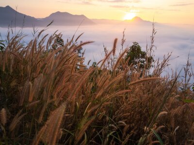 Fototapeta Krásná krajina hluboké mlhy Phu Thok