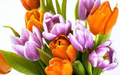 Fototapeta Krásná kytice z fialové a červené tulipány na bílém pozadí