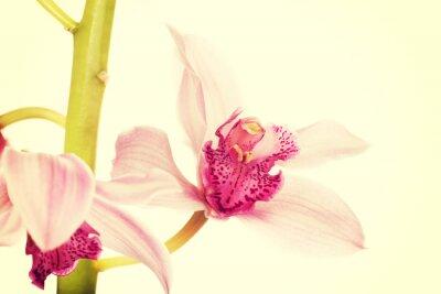 Fototapeta Krásná svěží růžové lilie.