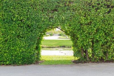 Fototapeta krásná zahrada