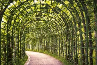 Fototapeta Krásná zelená arkáda v parku s cestou.