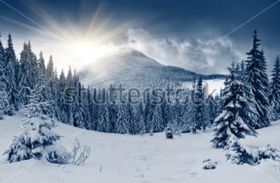 Fototapeta Krásná zimní krajina s zasněženými stromy