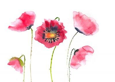 Fototapeta Krásné červené máku květiny, akvarel