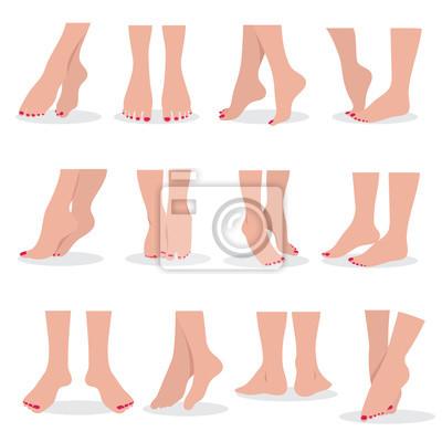 8fc81bb7369 Fototapeta Krásné holé ženy nohy a nohy izolované. Ženské části těla  atraktivní vektor krásy vektor