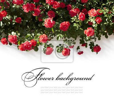 krásné květinové pozadí