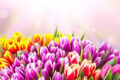 Fototapeta Krásné květy tulipánů
