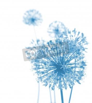 Fototapeta Krásné Modré květiny / abstraktní kompozice na bílém pozadí