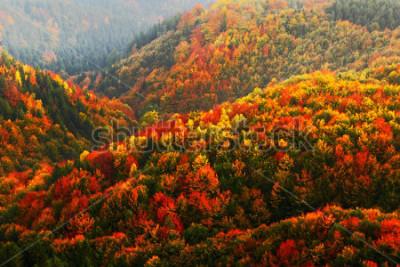 Fototapeta Krásné oranžové a červené podzimní les, mnoho stromů na oranžové kopce, národní Park České Švýcarsko, Česká republika.
