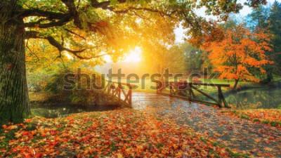Fototapeta Krásné podzimní krajina v parku. Venkovní fotografie ve světle slunce