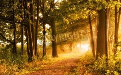 Fototapeta Krásné podzimní scéna zve na procházku na mlhavé chodník v lese s paprsky slunečního světla