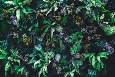 Fototapeta Krásné přírodní pozadí vertikální zahrady s tropickým zelený list