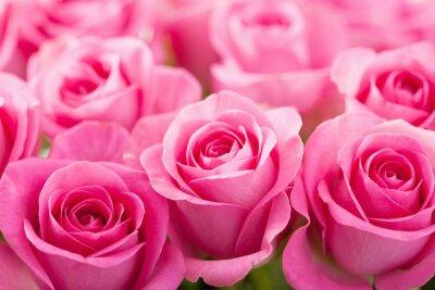 Fototapeta krásné růžové růže květiny na pozadí