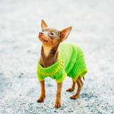 51a3069cbf8 Krásné aljašský malamut pes outdoor fototapeta • fototapety malamut ...