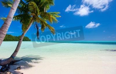Fototapeta Krásnou tropickou pláž s palmami, bílým pískem, tyrkysové moře vody a modrá obloha na Palau