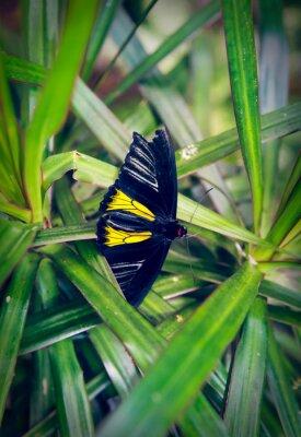 Fototapeta Krásný motýl sedí na velkém listu