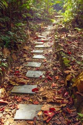 Fototapeta Krásný výhled na schodiště do džungle,, Thajsko
