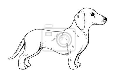 Kresba Jezevcika Pes Rucni Nacrtek Jezevciho Psa Cerna A Bila