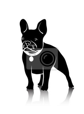 Kresba Psa Bojoveho Plemene Fototapeta Fototapety Bojovani Beagle