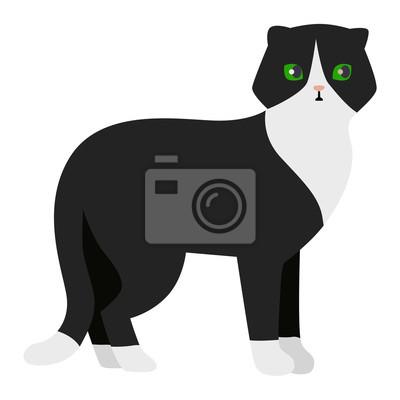 Opravdu černá kočička