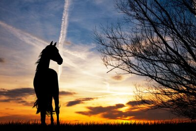 Fototapeta kůň silueta při západu slunce