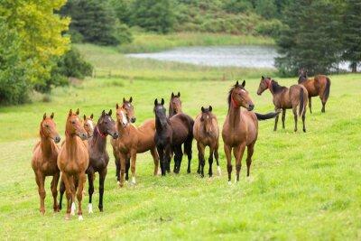 Fototapeta kůň stádo