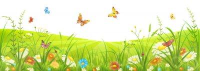 Fototapeta Květinové léto nebo jarní louka s zelená tráva, květiny a motýli
