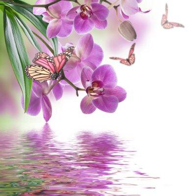 Fototapeta Květinové pozadí tropických orchidejí a motýlů