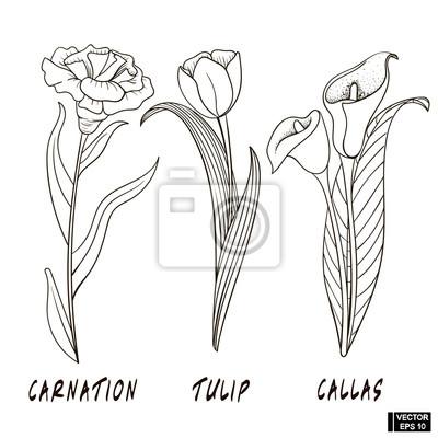 Kvetiny Ve Stylovem Rucnim Kresleni Fototapeta Fototapety