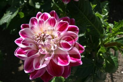 kvetoucí rostlinu