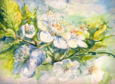 Fototapeta Kvetoucí větev třešeň akvarel malovaný