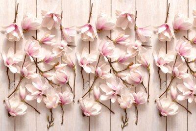 Fototapeta kwiat magnolii, kwiat, roślina, biała, beuty, galąź, drzewo magnolii, kwiatowy, fiolet, kwitnienie, flora, botanika, ornament z magnolii, kompozycja magnolii, układ kwiatów magnolii, pąki magnolii, fl