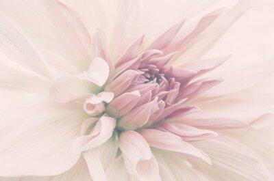 Fototapeta Kwiat ze ślubnego bukietu, delikatne płatki, ujęcie makro.