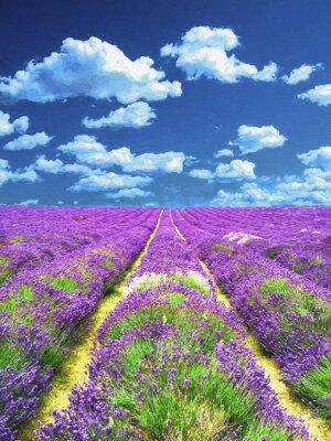 Fototapeta Lavender pole. Olejomalba.