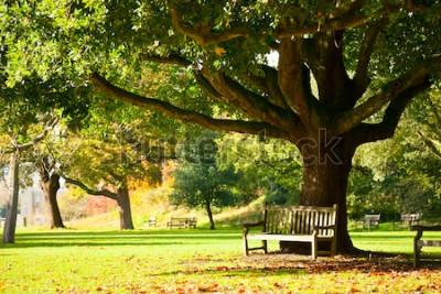 Fototapeta Lavička pod stromem v Královských botanických zahradách v Londýně