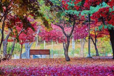Fototapeta Lavička v parku s mnoha listy červeného javoru. Klidné místo.